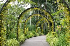 Organic Gardening Information Singapore Garden, Singapore Botanic Gardens, Singapore City, Yellow Orchid, Stock Foto, Top Destinations, Types Of Plants, Garden Bridge, Botanical Gardens