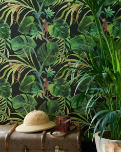 A funny green jungle leaf wallpaper design that is on a colored background with . A funny green jungle leaf wallpaper design that is on a colored background with . Tropical Wallpaper, Colorful Wallpaper, Green Leaf Wallpaper, Monkey Wallpaper, Wallpaper Jungle, Jungle Bedroom, Monkey Bedroom, Extra Image, Wallpaper Online