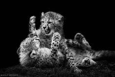 black and white, photography, beautiful, inspiration,