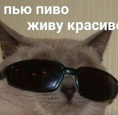 Meme Pictures, Reaction Pictures, Funny Photos, Hello Memes, Russian Memes, Cute Love Memes, Funny School Memes, You Meme, Work Memes