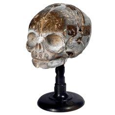 1800s Dr. Auzoux Papier-Mâché Fetal Skull