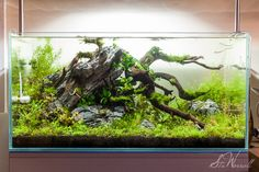 Pin by Aqua Poolkoh on Aquascapes