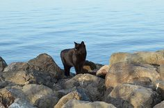 Cat on rocks by the sea