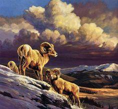[EndLiss scans - Wildlife Art] Jocelyn Lillpot Russell - Storm Warning (Bighorns)