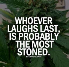 Buy marijuana seeds online from Crop king Seeds. Premium quality cannabis seeds at affordable prices. Choose from the best quality autoflowering, feminized, and regular cannabis seeds with quick and discreet delivery worldwide. Stoner Quotes, Stoner Humor, Weed Quotes, Weed Humor, 420 Quotes, Weed Memes, Qoutes, Funny Quotes, Quit Smoking Tips