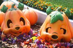Chip 'n Dale Pumpkins - Tokyo Disneyland Disney Events, Disney Love, Disney Magic, Disneyland Halloween, Tokyo Disneyland, Disney World Trip, Disney Parks, Cute Disney Pictures, Chip And Dale
