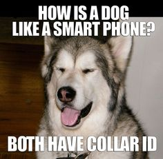 Easygoing Dog: How is a dog like a smart phone? Both have collar ID!