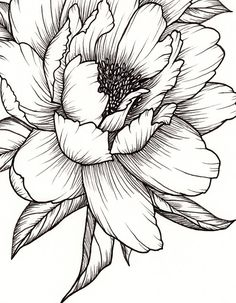 Peony Flower Art PRINT of Pen Illustration Flower Drawing Floral Tattoo Botanical Line Drawing Feminine Art Peony Tattoo Wall Decor Drawing Art Botanical Decor drawing Drawing flowers feminine Floral flower illustration line pen peony Print Tattoo Wall Peony Drawing, Flower Art Drawing, Botanical Line Drawing, Floral Drawing, Flower Sketches, Flower Drawings, Drawing Drawing, Drawing Ideas, Flower Artwork
