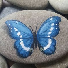 Photo from yaseninharikalaratolyesi Seashell Painting, Butterfly Painting, Pebble Painting, Pebble Art, Stone Painting, Rock Painting Patterns, Rock Painting Ideas Easy, Rock Painting Designs, Painted Rock Animals