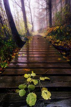 WALKING IN THE RAIN - null