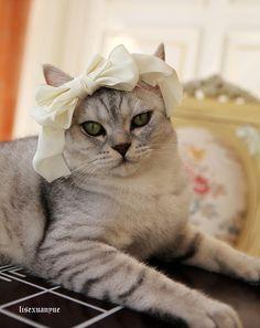Fancy...so guckt mein Kater auch immer wenn ich ihm eine Schleife oder so etwas auf den Kopf packe :D