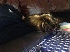 Sleepy little mutt