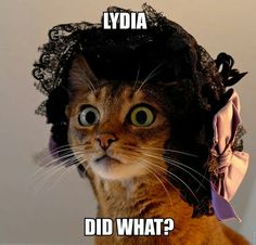 Pride and Prejudice Humour humour Funny Cats, Funny Animals, Cute Animals, Jane Austen Novels, Photos Voyages, Cat Hat, Fauna, Pride And Prejudice, Period Dramas