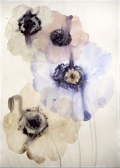 Lourdes Sanchez, 3 anemones watercolor and ink on paper 29.5 ¨x 43¨