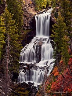 Yellowstone National Park: really want to visit again-- camping & fishing at Hebgen... it's been way too long!