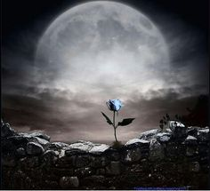 <3 This is sooo photoshopped, but I just love it, the full moon & the lone blue rose of forgetfulness, so poetic <3