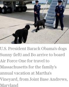 First Family Obama's Family Dogs Bo & Sunny Joining President Of The United…