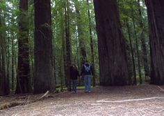 Walking through the Redwoods on the Avenue of the Giants. March 12, 2014