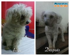 El antes y después de COPITO. Muchas gracias a su mamita Miriam por confiar en mi trabajo.