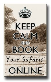 Want to GO on a game drive from Hazyview. Safari Online, Private Safari, Small Group Tours, Kruger National Park, Day Tours, Wildlife