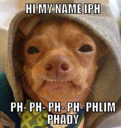 New Memes En Espanol Risa Perros Ideas Funny Animal Memes, Funny Animal Pictures, Funny Images, Funny Animals, Cute Animals, Funny Kids, Funny Cute, Hilarious, Tuna Dog