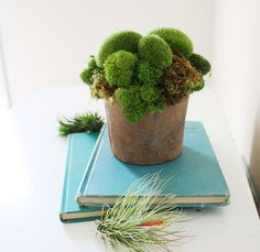 Moss is the symbol for maternal love....from the Languge of Flowers....beautiful book!!