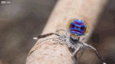 The Amazing Spider Brain: A Great Mystery In A Tiny Head - braindecoder