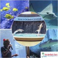 If you have never been to the Maui Ocean Center, you really need to check this out! http://www.tombarefoot.com/info/Exploring_Mauis_Aquarium_at_Maui_Ocean_Center.html