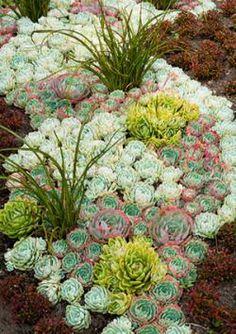 http://cf.ltkcdn.net/garden/images/std/187828-250x354-succulents.jpg