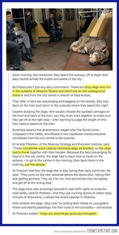 "No clue about the validity of this article, but it is still cute to think about. ""Some Seriously Smart Stray Dogs in Russia. I Love Dogs, Puppy Love, Funny Animals, Cute Animals, Smart Animals, Funny Pets, Faith In Humanity, Make Me Smile, In This World"
