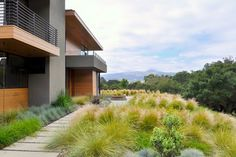 concrete stepping pads, Ipe deck, water feature, grasses - modern - landscape - san francisco - Huettl Landscape Architecture