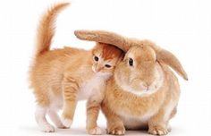 Here comes Peter Cottontail and his kitty friend.