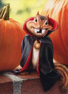 Chipmunk Vampire Stand Out Pop Up Funny Halloween Card Greeting Card by Avanti in Home & Garden, Greeting Cards & Party Supply, Greeting Cards & Invitations | eBay