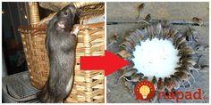 K dispozícii je množstvo komerčných produktov, ktoré odoženú myši a potkany od vášho domu. Mnohé z týchto produktov však obsahujú toxické chemikálie, ktoré môžu byť škodlivé aj pre vašu rodinu či domácich miláčikov. Marketing