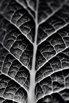TEXTURE is shown through the veins and contrast between gray and black.