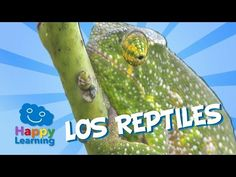 Los Reptiles | Videos Educativos para Niños - YouTube