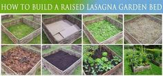 Healthy Sustainable Living: Have YouTried a Raised Lasagna Bed Garden?