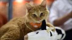 It's not too late to adopt these New Year's resolutions for your cat!