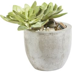 Ethan Allen Echeveria in Pot (3 000 UAH) ❤ liked on Polyvore featuring home, home decor, floral decor, plants, fillers, flowers, decor, ethan allen, flower pots and distressed home decor
