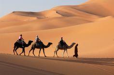 camel caravan going through the sand dunes in the sahara desert morocco. Abu Dhabi, Marrakech, Desert Safari Dubai, Desert Trip, Desert Life, Desert Oasis, Nature Spirits, Ad Art, Going On Holiday