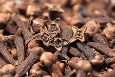Clove Oil (Eugena caryophyllata thunburg) Benefits can be attributed to its antimicrobial, antifungal, antiseptic, aphrodisiac and stimulating properties. Healing Herbs, Medicinal Herbs, Herbs For Health, Health Tips, Parasite Cleanse, Clove Oil, Homemade Detox, Natural Detox, Natural Health Remedies