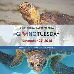 Leave a legacy of ocean conservation and be known as someone who helped create a revolution of change. Today only, your donation will be matched up to $10 with #donate. Comment #donate $25 (or any amount) and we will reply with a quick form to confirm your donation. By participating in #GivingTuesday you are helping change the world. www.marinelife.org/donate