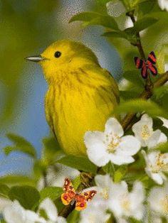 Птичка - анимация на телефон №1322645