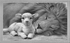 Lion And Lamb F5 Wildlife Animal Livestock #1307020