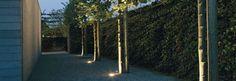 jardin paysager et déco moderne : idée d'éclairage