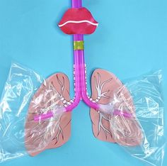 HOW TO MAKE A LUNG MODEL WITH KIDS