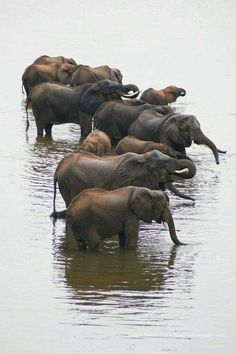 Elephants in bathtub