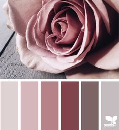 { petaled tones } image via: @georgiestclair