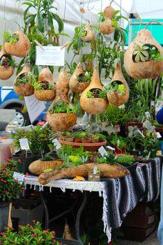 Gourd Planters | Diana's Designs Austin