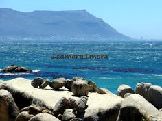 1camera1mom: Boulders Beach, Cape Town - 5 #South #Africa #photography